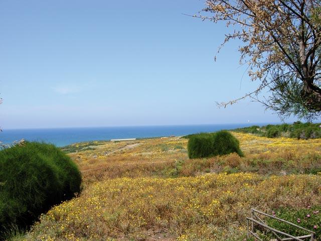 Sito Eraclea Minoa tra tanta erba