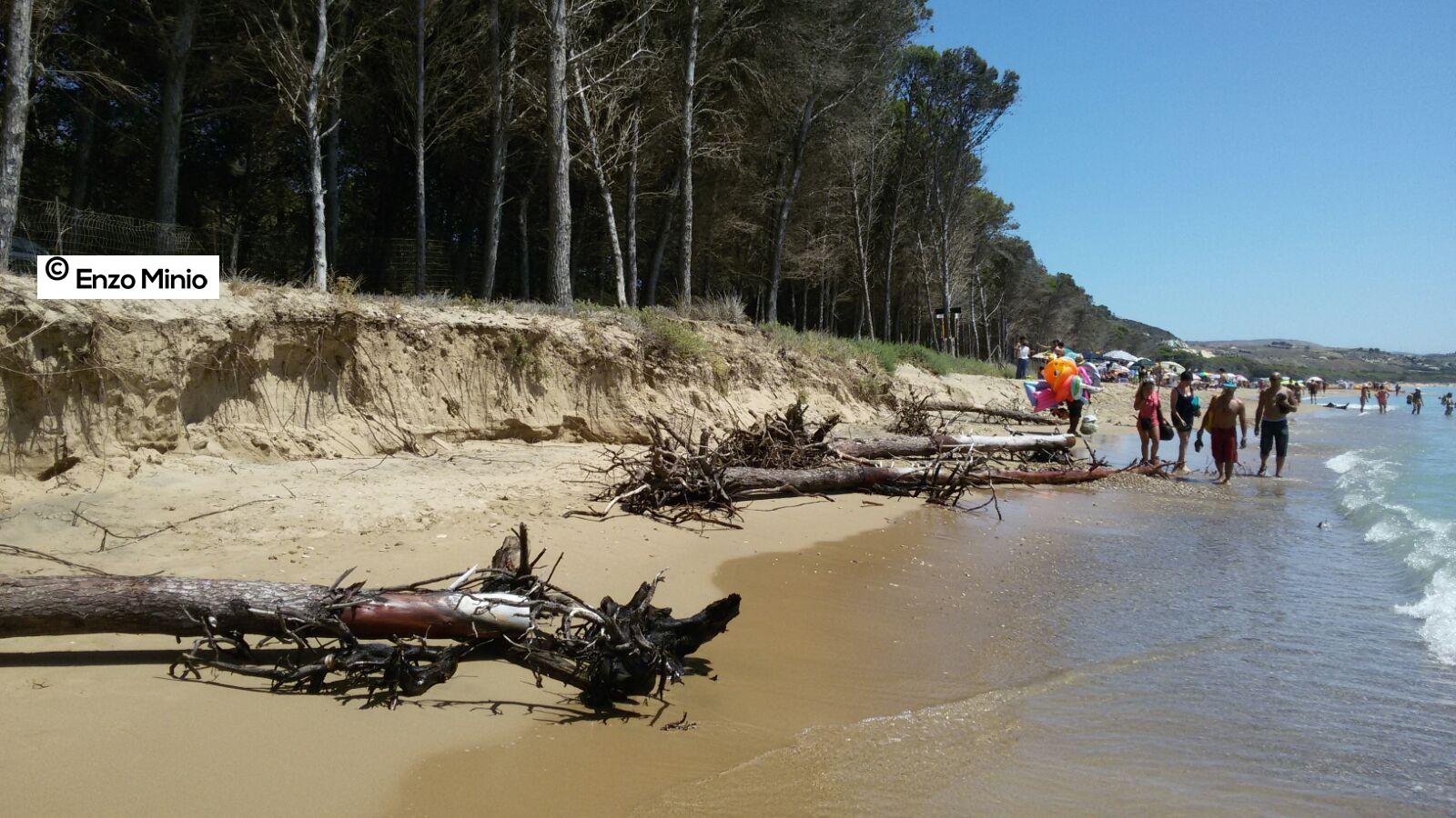 Eraclea Minoa tronchi sulla spiaggia FOTO MINIO