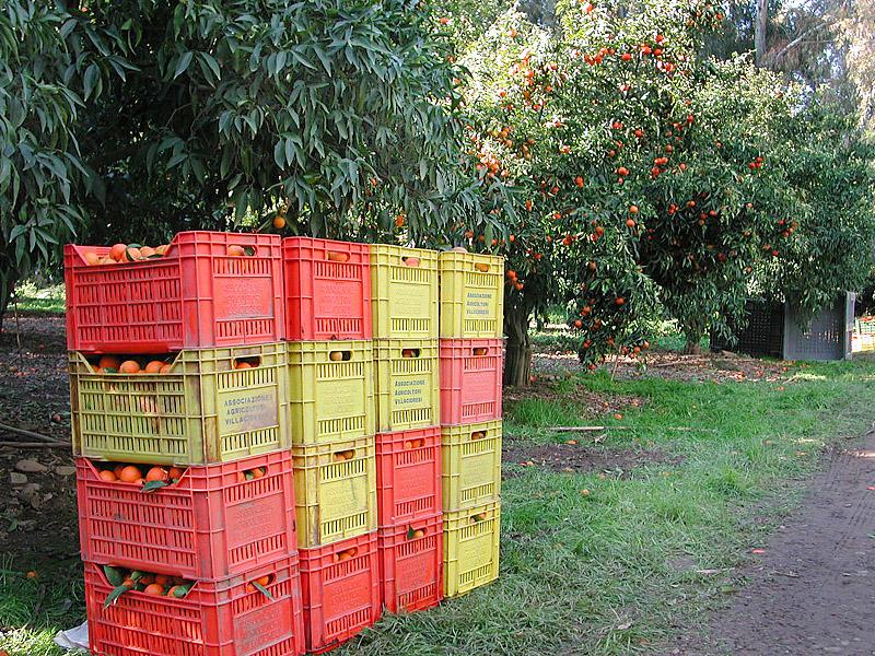 agrumi in cassetta