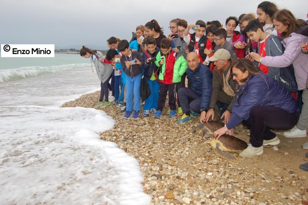 Tartarughe riserva naturale foce Platani 2 FOTO MINIO