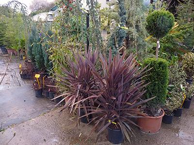 piante vivaio