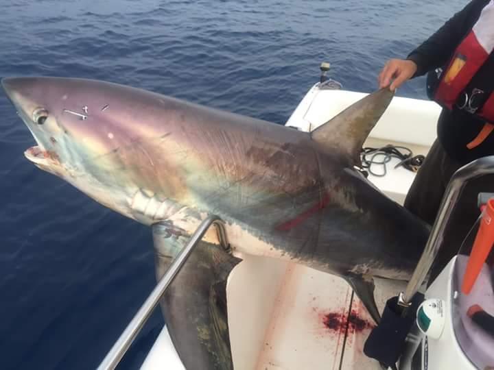 squalo SEccagrande 2
