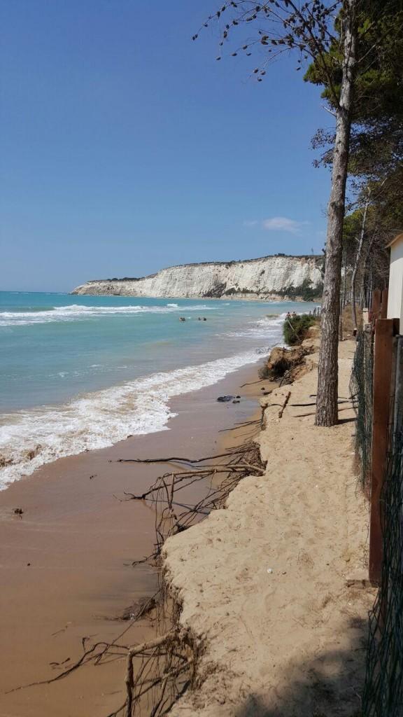 Eraclea Alberi tagliati sul litorale