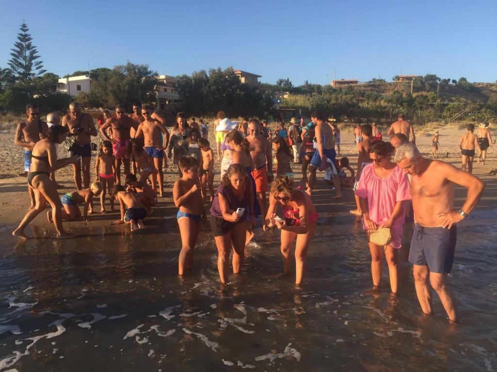 Tartarughe in acqua a Porto Palo Menfi