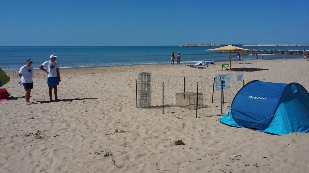 Tartarughe sulla sabbia  a Porto Palo Menfi