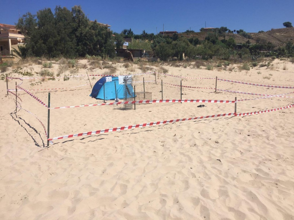 Tartarughe sulla sabbia  a Porto Palo Menfi 2