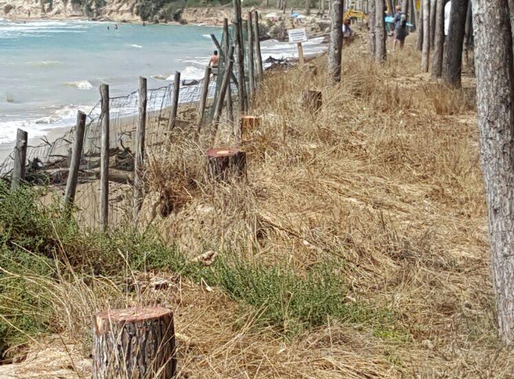 Eraclea alberi tagliati sulla spiaggia (1)