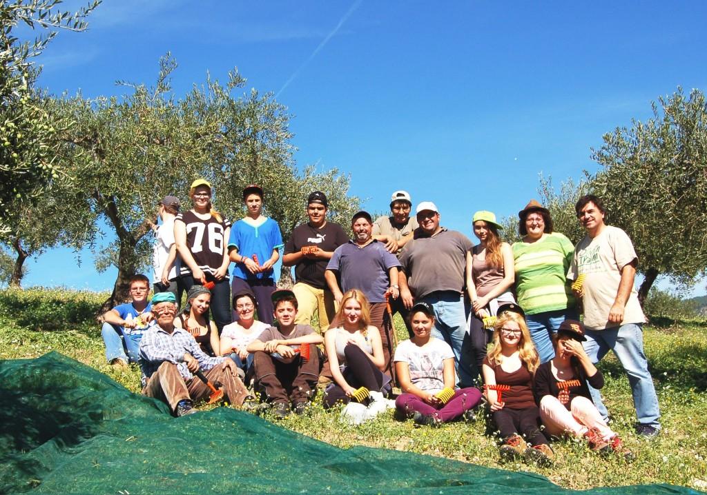 Lucca Sicula Gli studenti tedeschi raccolgono le olive