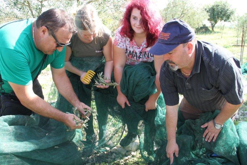 raccolta olive studenti tedeschi 1