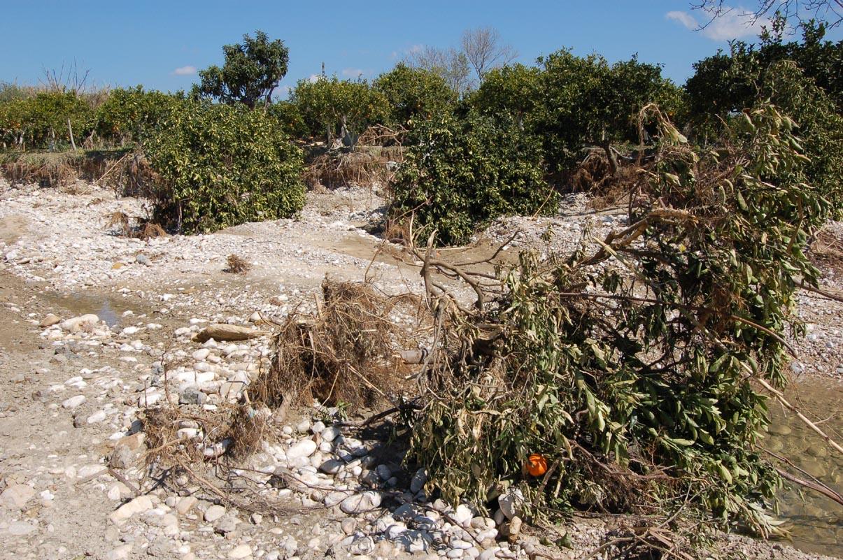 fiume Verdura aranci travolti dalle acque