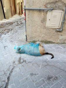 Bivona Cani morti in paese (1)
