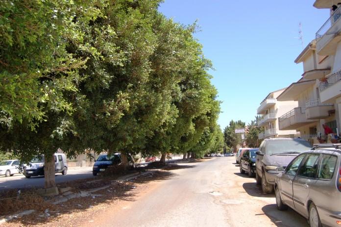 Via-Canova-e-gli-alberi